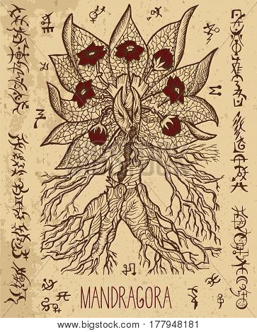 Mystic illustration with mandragora magic root and occult symbols. Hand drawn engraved vector illustration. There is no foreign text in the image, all symbols are imaginary and fantasy ones