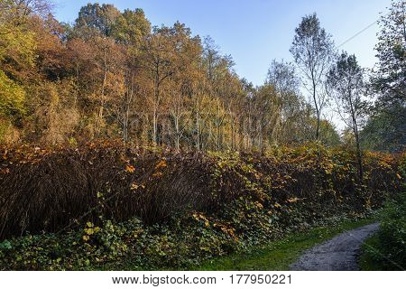 Pedestrian and bicycle track along the Lambro river Monza Brianza Lombardy Italy) at fall