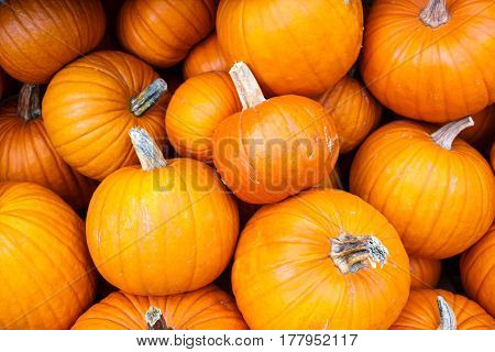 Many Classical Orange Autumn Pumpkins On Market For Halloween