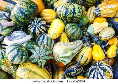 Lots Of Colorful Autumn Pumpkins And Squashes