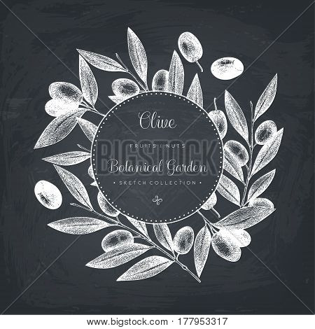 Vintage card design with hand drawn olive tree sketch. Vector template. Botanical illustration.