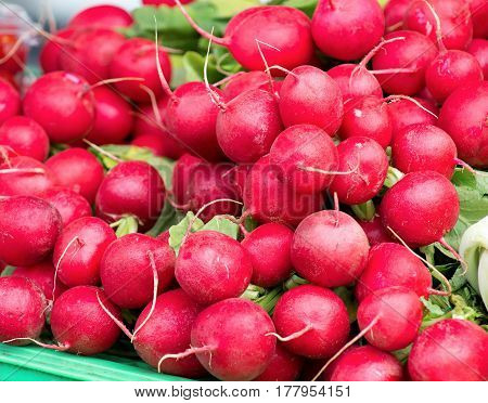 ripe radish ready for sale at a local vegetable market