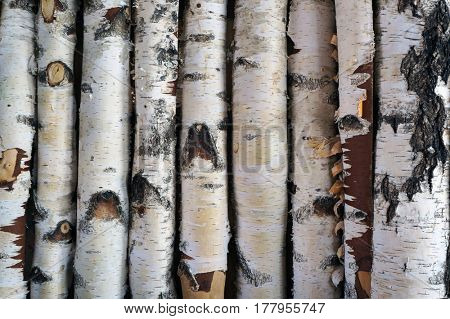 Birch logs fence. Natural textured background.