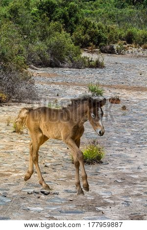 Foal in dried-out riverbed looking for his mother.
