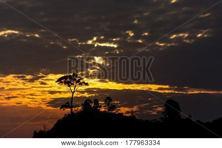 Silhouetted tree covered hilltop at a dramatic Sunset.