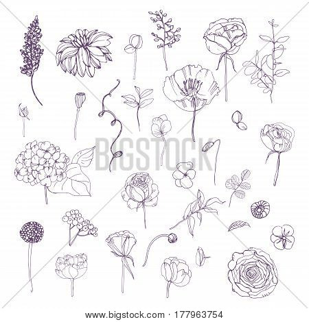 Hand drawn outline floral elements set, Collection with different flowers and plant.