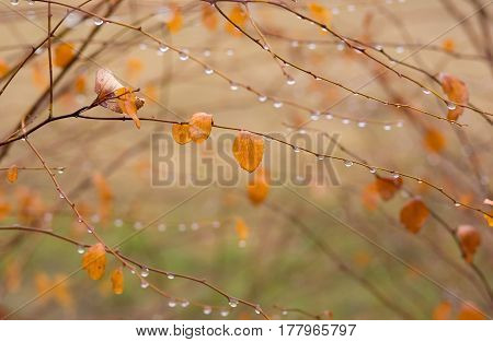Beautiful late autumnal natural background in pastel colors (shallow DoF).