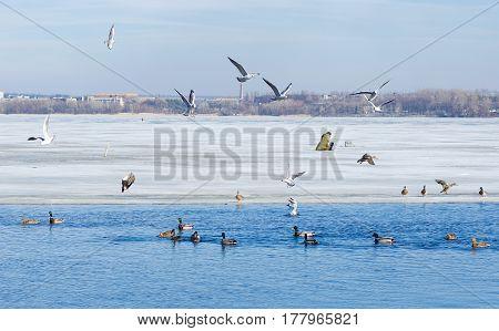 Life on a winter river Dnepr Ukraine.