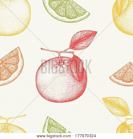 Vector seamless pattern with ink hand drawn grapefruit fruit. Citrus sketch