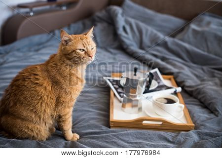 Coffee and breakfast in bed with lazy ginger cat, cozy morning home styled meal.