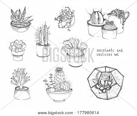 Cactus and succulents set, Collection plants in pots, florarium isolated on white background. Hand drawn illustration in sketch style.