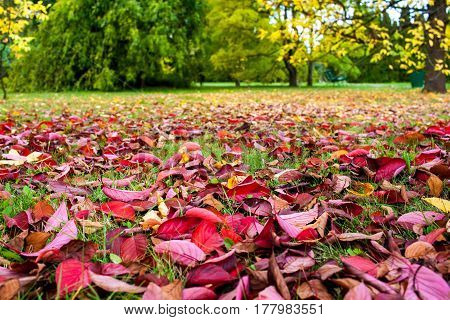 Colorful Background Of Red Beautiful Fallen Autumn Leaves. Many Fresh Leaves, Just Have Fallen On Th