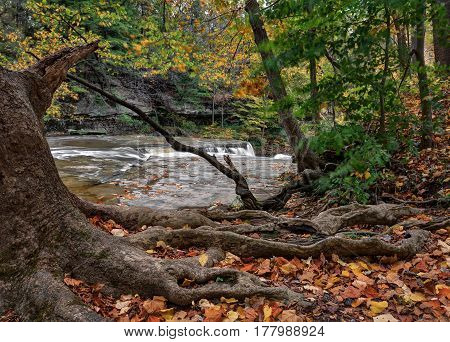 Beautiful autumn scene at The Great Falls of Tinker's Creek Gorge in Cleveland Ohio. A gnarly tree in the foreground near the river bank.