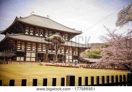 Buddhist Temple At Cherry Blossom In Nara, Japan