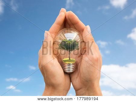 recycling, conservation, environment and ecology concept - close up of hands holding light bulb with tree inside over blue sky background