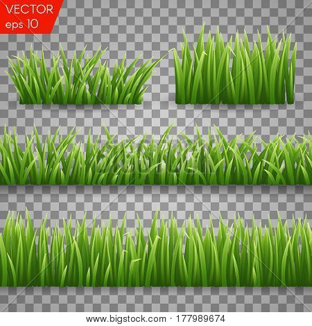 Green Grass Borders Set and herbs elements. Vector Illustration