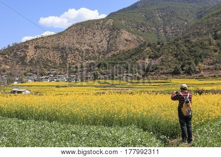Shigu, China - March 17, 2017: Tourist Taking Pictures Of The Canola Flowers Nearby Shigu Village On