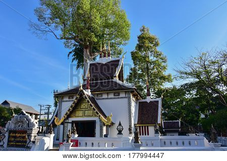 The temple of Sao Inthakin with dipterocarp tree (Yang trees) in the background Chiang Mai - Thailand