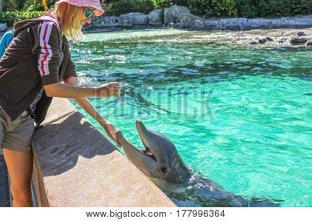 Smiling woman feeds a dolphin in a water.