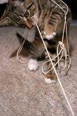 Kitten pulling string poster