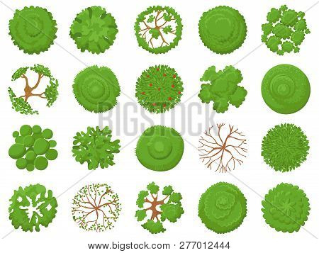 Top View Tree  Vector & Photo (Free Trial) | Bigstock