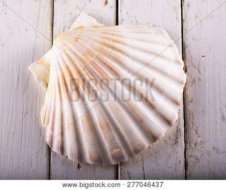 Seashell Over White Wooden Table