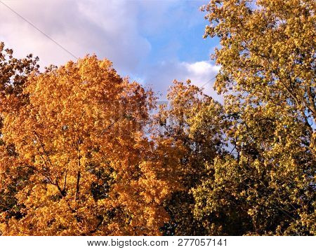 Vibrant Autumn Colors Against A Mixture Of Clouds And Blue Skies In Kentucky.