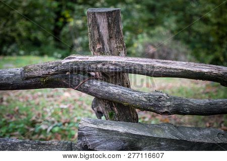 Natural Hand Made Fence Made Of Wooden Tree Brenches. Close Up View Of Village Fence With Moss On Wo
