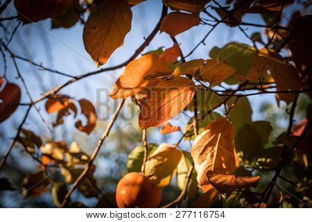 Fall Scene. Beautiful Autumnal Park. Leaves Forest Path In Autumn.