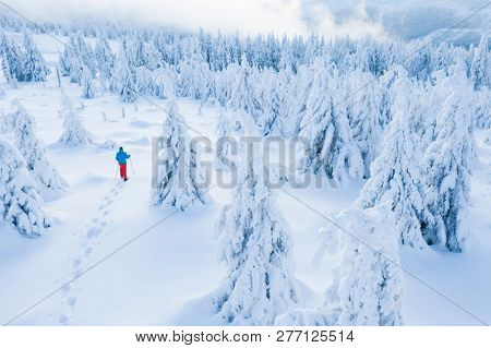 Aerial view of snowshoes walker in snowy spruce forest. Winter outdoor leasure activity and extreme sport.