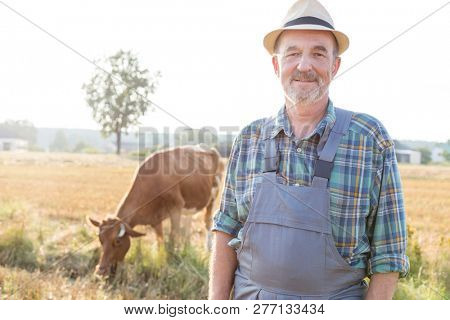 Portrait of senior farmer standing against cow on field at farm
