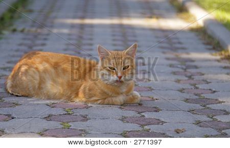 Cat lying down in the middle of the road poster