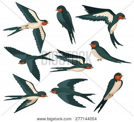 Flying Swallow Birds In Various Views Set, Flock Of Birds With Colored Plumage Vector Illustration O