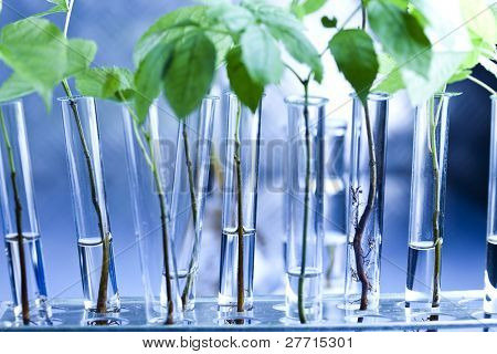 Plant and laboratory