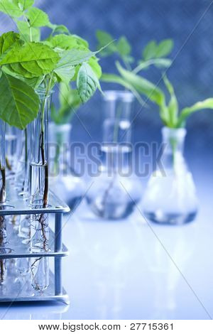 Floral science in blue laboratory