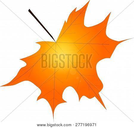 Illustration Eines Ahornblattes Mit Durchscheinender Sonne Im Hintergrund