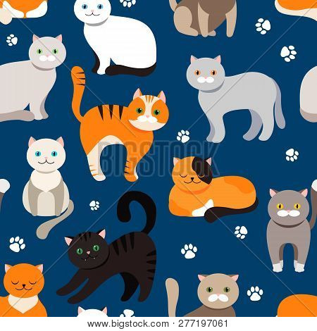 Cat Background, Seamless Pattern. Vector Flat Illustration. Kitty, Pets. Exotic And Ordinary Cats. C