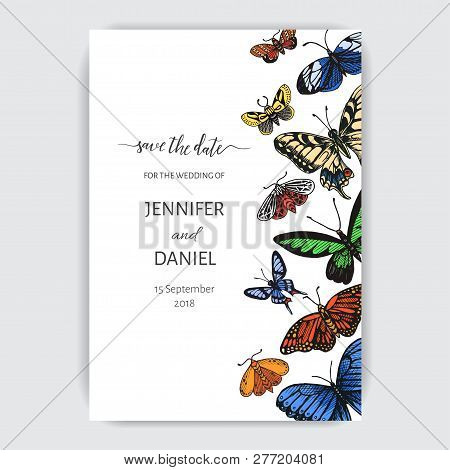 Hand Drawn Sketch Wedding Illustration Butterfly. Vector Card With Butterflies.