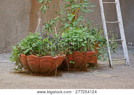 Two Large Stone Brown Vases With Decorative Green Vegetation On Gray Asphalt Against The Wall With A