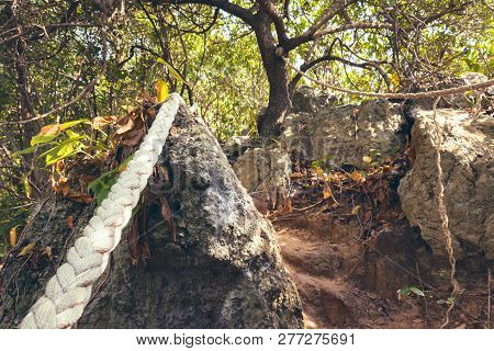 Trail In A Tropical Rainforest. Trail With Steps And Ropes For Safety In A Jungle. Concept Of A Jour