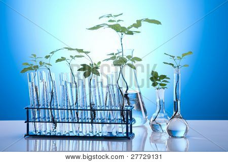 Close-up of plants in test tubes aboratory