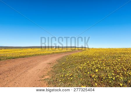 Nieuwoudtsville, South Africa, August 28, 2018: Vehicles In A Field Of Wildflowers At Matjiesfontein