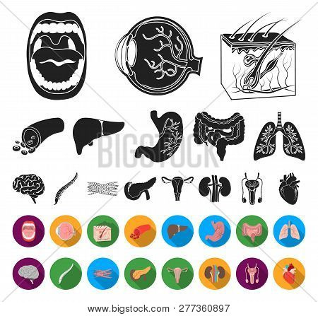 Internal Organs Of A Human Black, Flat Icons In Set Collection For Design. Anatomy And Medicine Vect