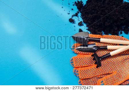 Planting Home Plants Indoors. Home Gardening Concept. Earth, Gloves And Tools On Blue Background. Wo