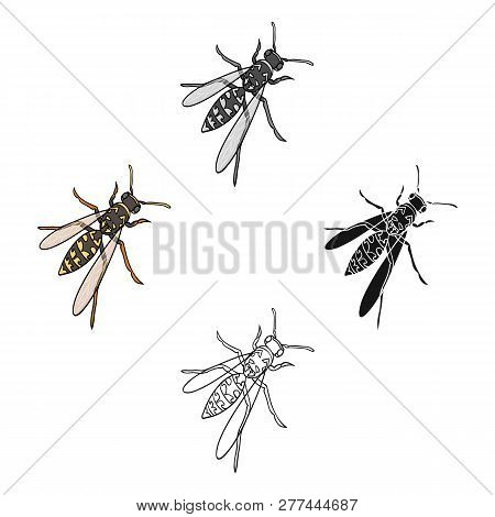 Wasp, Hymenopteran Insect.wasp, Stinging Insect Single Icon In Cartoon Style Vector Symbol Stock Iso