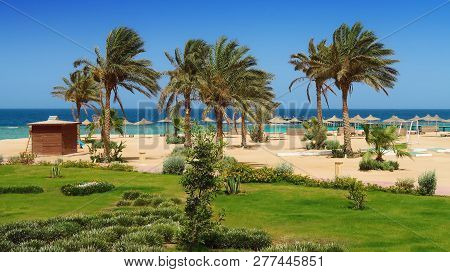 Idylic Hotel Beach With Palm Trees, Red Sea, Egypt