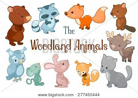 Woodland Animals Vector Clipart On White Background. Cute Vector Illustrations Of Bear, Beaver, Fox,