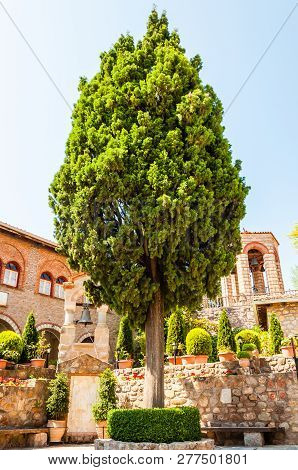 Meteora, Greece - June 16, 2013: Growing High Pine Tree Inside The Courtyard Of The Great Meteoron M