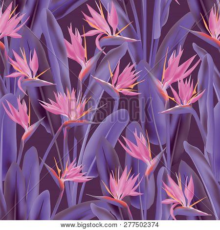 Strelitzia Reginae Tropical Flower Vector Seamless Pattern. Jungle Plant Paradise Tropical Summer Fa