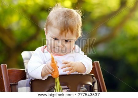 Cute Adorable Baby Girl Holding And Eating Fresh Carrot. Beatuiful Child Having Healthy Snack. Baby